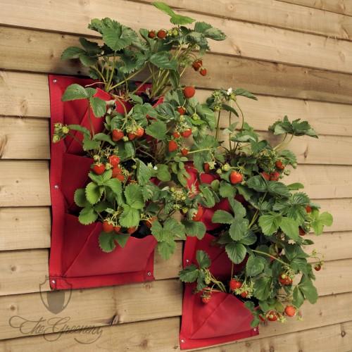 Pflanztaschen Selber Machen selbstversorgung nutzpflanzen selber anbauen seite 21