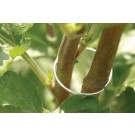Burgon & Ball Pflanzen Halterringe - groß - GYO/PEALG