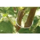 Burgon & Ball Pflanzen Halterringe - klein - GYO/PEASM