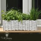 Burgon & Ball Weiden Fensterbank Pflanzset - Weiß GYO/HOHPW