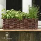 Burgon & Ball Weiden Fensterbank Pflanzset - GYO/HOWINN